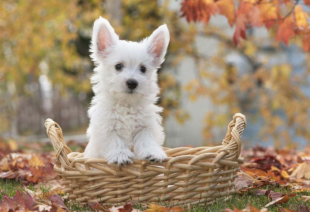 canine_0052_ebay_listing.jpg